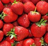 jordgubbejordgubbe Arkivfoton