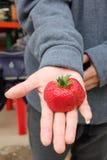Jordgubbejumboformat på handen Arkivbild