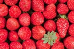 jordgubbemagasin Arkivbild