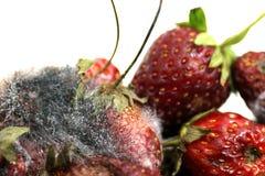 Jordgubberöta, rutten frukt, bär frukt möglig rutten frukt i en pilbåge Royaltyfri Foto