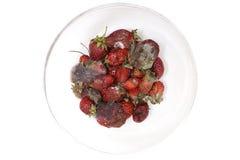 Jordgubberöta, rutten frukt, bär frukt möglig rutten frukt i en pilbåge Arkivbild