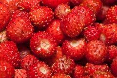 jordgubbeskogsmark fotografering för bildbyråer