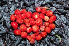 jordgubbeskogsmark arkivfoto