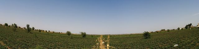 Jordgubbeväxter Arkivfoto