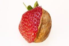 jordgubbevalnöt Arkivfoto