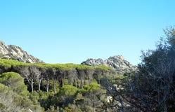 Jordiskt paradis i det medelhavs- Skärgård av Maddalena, Caprera ö arkivbild