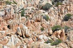 Jordiskt paradis i det medelhavs- Skärgård av Maddalena, Caprera ö Royaltyfria Foton