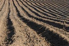 Jordkanter i ett potatisfält i vår plantera potatisar Arkivbilder
