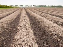 Jordkanter i potatisfält Arkivfoto