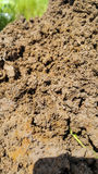 jordkorn Royaltyfria Foton