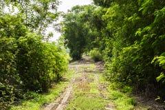 Jordkorridor in i den djupa skogen Royaltyfri Bild