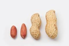 jordnötter Arkivfoton