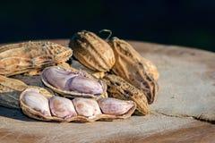 Jordnötter för din hälsa Fotografering för Bildbyråer