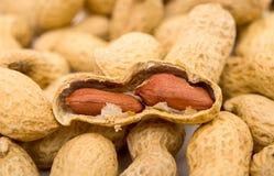 Jordnötter i skalet royaltyfri foto