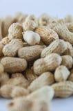 Jordnötter kärnar ur Många jordnötter i skal för closedof för bakgrund 1ds jordnötter för mkii för eos blir grund upp Royaltyfri Fotografi