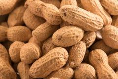Jordnötter med skalbakgrund Arkivfoton