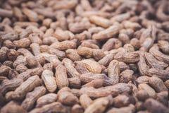 Jordnötter torkas i solen royaltyfri fotografi