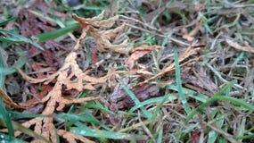 jordning Royaltyfria Foton