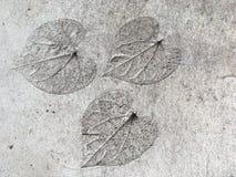 jordning Royaltyfria Bilder