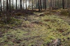 Jordning med mossa i en skog Arkivbild