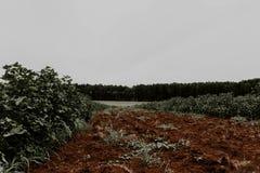 Jordning och skogen royaltyfria bilder