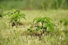jordning planterar barn Royaltyfri Bild