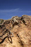 jordning smutsar royaltyfri foto