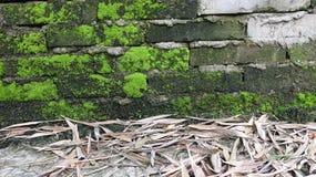 Jordningen täckas med bambusidor royaltyfria bilder