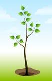 jordningsväxttree Arkivbild