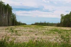 Jordsikt av en bred brandgata i ett tungt forested område Royaltyfria Bilder