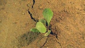 Jordskalvrevor grundar ifrån varandra och att skaka jorden med sprickan i land med den växande växten, katastrofbegreppet stock video