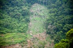 Jordskred i skogen Arkivbild