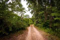 Jordväg i skog Royaltyfria Bilder