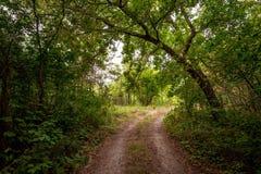 Jordväg i skog Arkivfoton