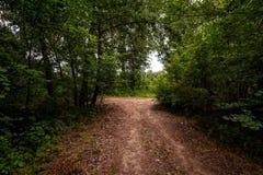 Jordväg i skog Royaltyfri Bild