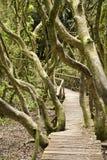 森林磨损处jorge雨 库存照片
