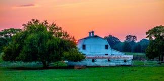 Jork Carolina bielu róży południowy miasto obraz stock