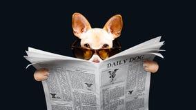 Jornal da leitura do cão imagem de stock