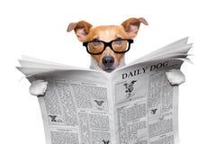 Jornal da leitura do cão imagens de stock royalty free