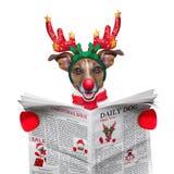 Jornal da leitura do cão Fotos de Stock Royalty Free