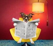 Jornal da leitura do cão em casa imagem de stock