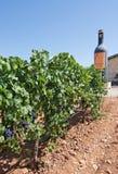Jose L. Ferrer vineyard Stock Photo