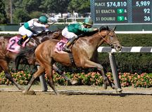 Jose Ortiz on U S Navy Cross. Horses are noses apart just past the sixteenth pole as U S Navy Cross beats Till Then, on the rail, in a thrilling finish at royalty free stock photo