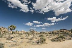 Joshua-Bäume in der Wüste Lizenzfreie Stockfotos
