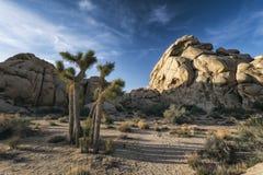 Joshua-Bäume in der Wüste Lizenzfreie Stockbilder