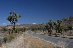 Joshua-Baum-Nationalpark Lizenzfreie Stockfotos