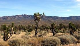 Joshua-Baum-Nationalpark stockbilder