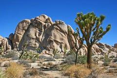 Joshua-Baum und der Felsen stockfoto