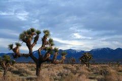 Joshua drzewa cloudscape w Południowego Kalifornia wysokości pustyni blisko Littlerock Kalifornia Zdjęcie Stock