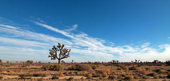 Joshua drzewa cloudscape w Południowego Kalifornia wysokości pustyni blisko Palmdale Kalifornia Zdjęcia Stock